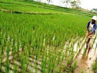 Kementan Klaim HET akan Stabilkan Produksi Beras Nasional