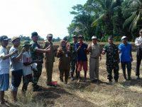 Koramil 0104/Cimanuk Tanam Jagung Seluas 1 Hektar