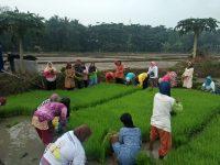 TNI-Polri Tanam Padi Bersama Petani, Tujuan Meningkatkan Produksi Pangan
